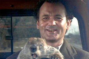 Everyday the same. Squirrel behind the wheel with Bill Murray